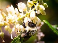 ハチにQRコードをつけたら「コロニーの神秘」が明らかに