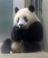 シャンシャン 12日に1歳 中国返還協定は「生後24カ月」 上野にはいつまで?