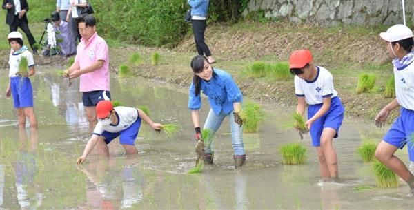 赤米手植え参加の相川七瀬さん「私自身も成長を感じます ...