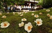 【動画】沙羅双樹の花の色…「平家物語」でうたわれた沙羅の花、はかなく美しく 京都・東林…