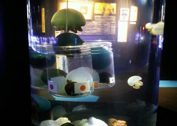 「日本勝利」と出たクラゲの勝敗占い(鶴岡市立加茂水族館提供)
