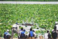 ロボットボートでハス刈り取り 大量繁茂の千葉・手賀沼で実証実験始まる