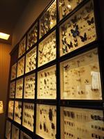 【関西の議論】大人が「自由研究」楽しめます 琵琶湖博物館の新施設、もちろん子供の夏休み…