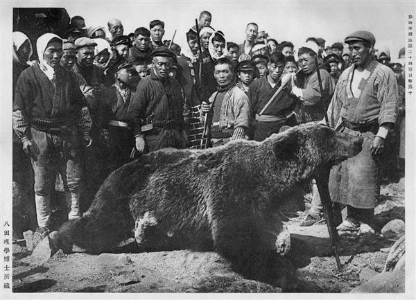 106年前に海を渡って利尻島に上陸、撲殺されたヒグマ(利尻富士町提供)