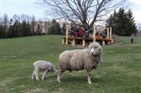 【イタリア便り】生きた草刈機はコスト安