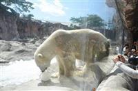 カイくんに氷の餌プレゼント 仙台・八木山動物公園