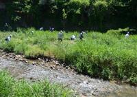 【関西の議論】河川敷のヨシを食べる 枚方・交野の「リサイクル」街おこし