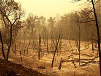 全米で止まらぬ山火事と「仮説」の崩壊 地球温暖化は予測不能な段階に