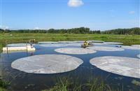 【クローズアップ科学】湖のアオコは日差しを遮ると増える? 予想外の実験結果、環境対策に…