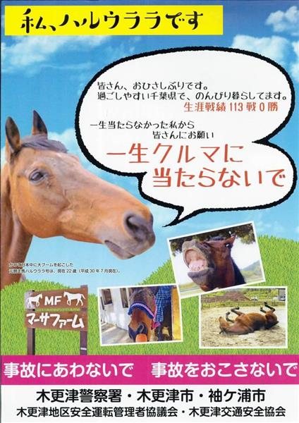 元競走馬・ハルウララ起用 「一生クルマに当たらないで」 千葉県警木更津署の交通安全ポスターが話題 - 産経ニュース