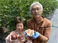 完熟の味を堪能して イチジク狩り園、26日開業 神戸・西区