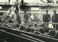 【海峡を越えて 「朝のくに」ものがたり】(33)日本は「供与」し民生を安定・向上させた…