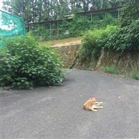 【田村秀男のお金は知っている】地鶏の用心棒猫、地方創生での論戦望む