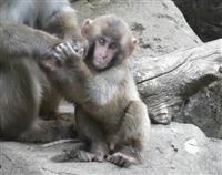 智光山公園こども動物園、ニホンザルの名付け親になろう 埼玉