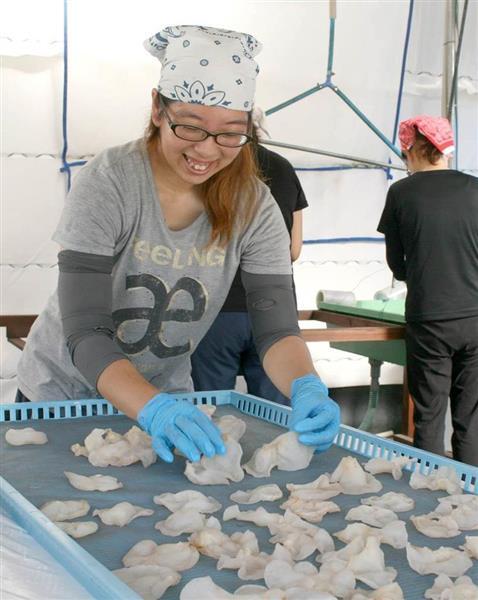 洗ったキクラゲを干し、出荷準備を進める麻耶さん=8月、和歌山県田辺市