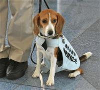 海外から食肉、だめだワン 羽田に新たな検疫探知犬