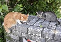 奄美、世界遺産目指し官民でネコ対策 生態系保全「住民意識高めたい」