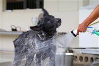 【北海道震度7地震】捜索活動の空自警備犬が帰還 ツイッターにねぎらいの声相次ぐ
