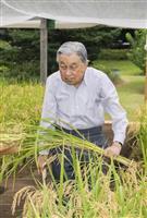 天皇陛下、恒例のお稲刈り