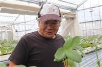 東日本大震災7年半 北海道と宮城 ふたつの被災地で奮闘 イチゴ農家の丸子さん親子