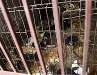 「犬や猫を食べないで」 ベトナム、市民に要請