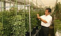 国産の薬用植物安定供給へ 千葉大・富士通など栽培実験