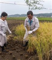 平成最後の新嘗祭 献穀米を収穫 栃木・益子