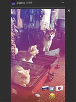 秋田犬のマサル元気な姿 ザギトワが来日前に写真公開