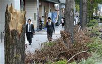 大阪のシンボル・御堂筋のイチョウ並木 台風爪痕なお…復旧急ぐ