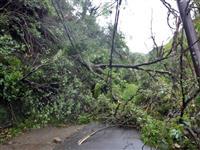 台風21号から1カ月 大阪府内の植物施設に大きな被害