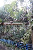 7日間の浜松大停電、複合要因で発生