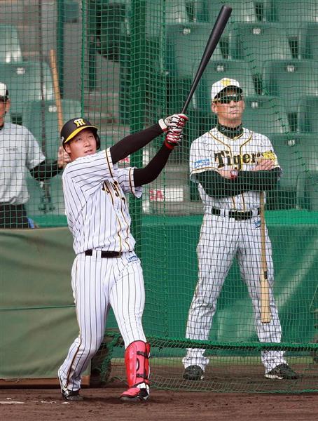 大山(左)の打撃練習を見守る阪神の金本監督。若手の育成は道半ばのまま退くことになった=12日午後、甲子園(松永渉平撮影)