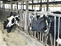 【プロジェクト最前線】AIが牛の病気や発情を検知 北海道のベンチャー企業ファームノート…