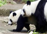 新たなパンダ貸与、日中首脳会談で要請も…菅義偉官房長官が示唆