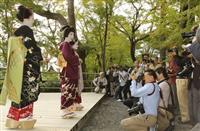 芸舞妓と御土居のもみじ競演 北野天満宮で撮影会
