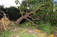10月の関西経済、台風影響も景気判断は据え置き 三菱UFJリサーチ&コンサル