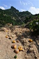 【経済インサイド】災害や気候変動に対応した食料生産体制づくりが急務