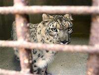 熊本市動植物園に地震避難の猛獣帰還 2年半ぶり