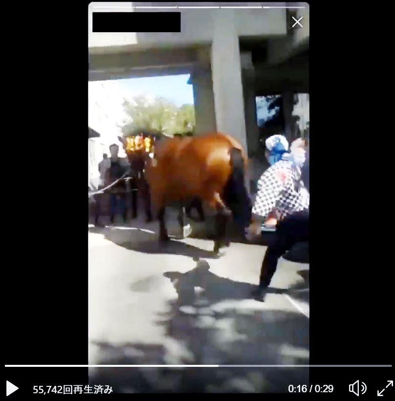 伝統の祭で馬にむち 動物虐待疑...