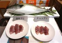 チョコでブリの鮮度保持 愛媛県が特許出願、カカオ効果で「長もち」