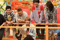 キンプリ・平野「坂上どうぶつ王国」で赤ちゃんライオンにミルクやり