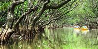 「奄美・沖縄」を世界自然遺産に推薦へ 菅義偉官房長官表明
