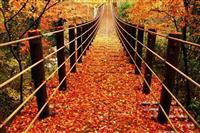 【日本再発見 たびを楽しむ】つり橋から眺める〝絵はがき〟のような世界~花貫渓谷(茨城県…