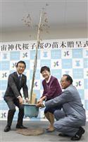 「宇宙桜」宮城・名取へ 復興支援に山梨から苗木