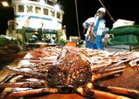ズワイガニ、3年後に半減? 日本海、新潟の研究所予測