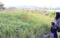 千年前の「猪名の笹原」再現? 和歌にも詠まれた原風景 伊丹市