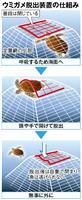 ウミガメは逃げられます 神戸の水族園 脱出装置の開発に成功