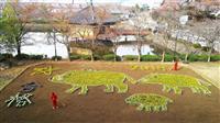 来年の干支「亥」のジャンボ花絵 奈良