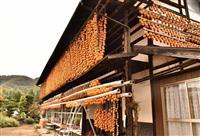 「ころ柿」づくり最盛期 山梨・甲州市
