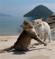 「必死すぎるネコ」撮影秘話(下)どう撮るの?